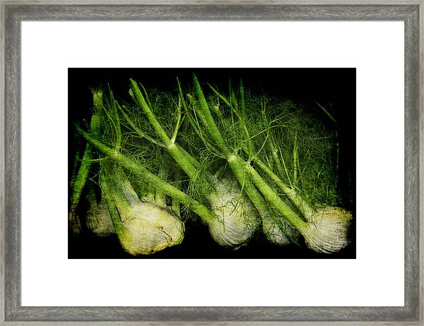 Flemish Fennel Art Framed Print