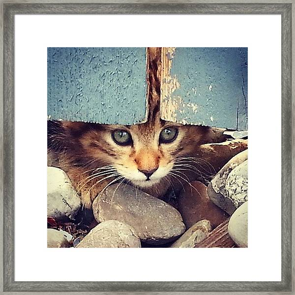 Peek A Boo Kitten Framed Print