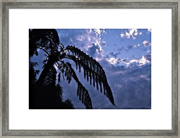 Fern At Twilight Framed Print