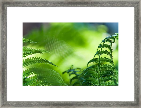 Fern Leaves. Healing Art Framed Print