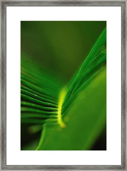 Fern Lines Framed Print