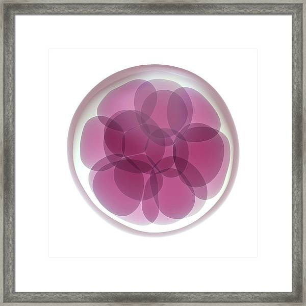 Fertilised Egg Cell Dividing Framed Print
