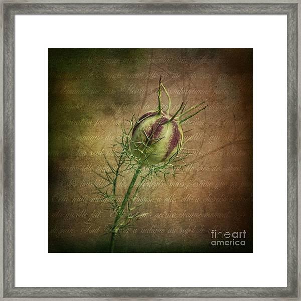 Fey Poppy Magic Framed Print