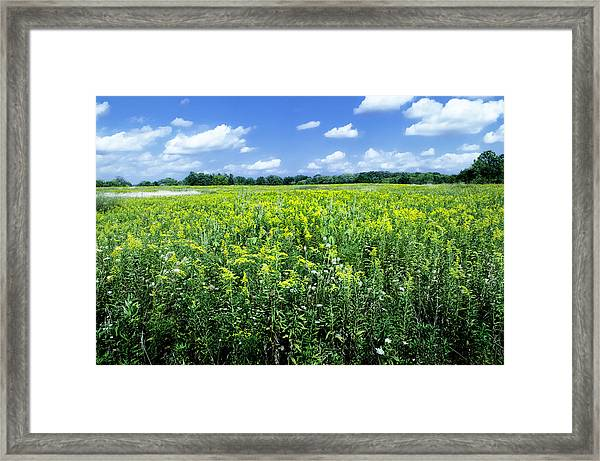 Field Of Flowers Sky Of Clouds Framed Print
