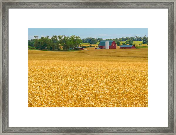 Framed Print featuring the photograph Fields Of Gold by Garvin Hunter