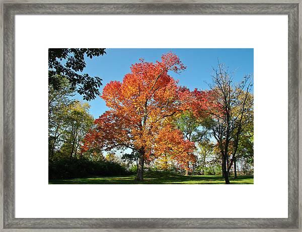Fiery Fall Framed Print