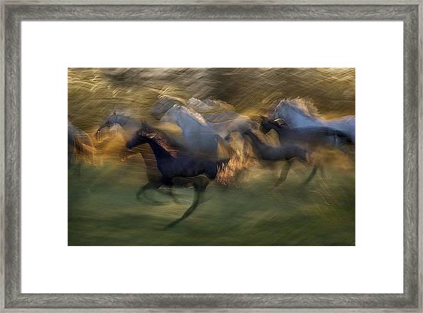 Fiery Gallop Framed Print by Milan Malovrh