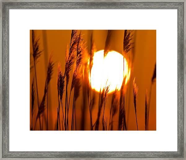Fiery Grasses Framed Print
