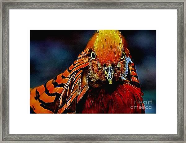 Fiery Pheasant Framed Print