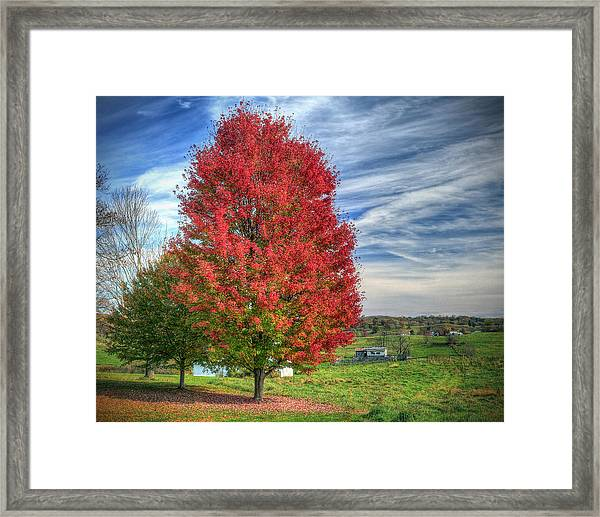 Fiery Red Maple Framed Print