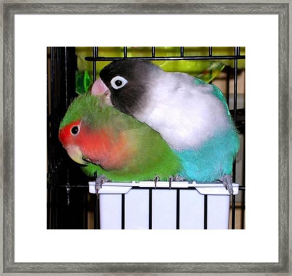 Fifi And Tut Framed Print
