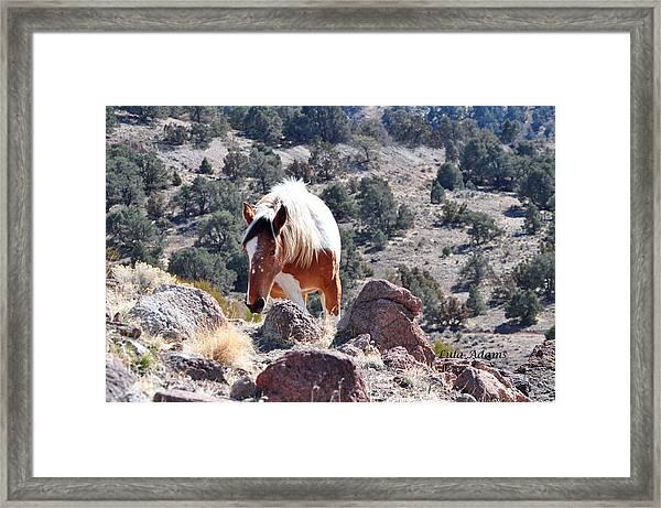 Filly Climbing  Framed Print