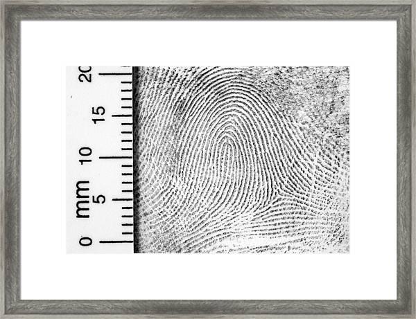 Fingerprint With Ruler For Measurement Framed Print by Living_images