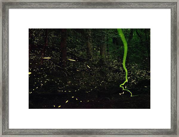 Fireflies Flash And Streak Framed Print