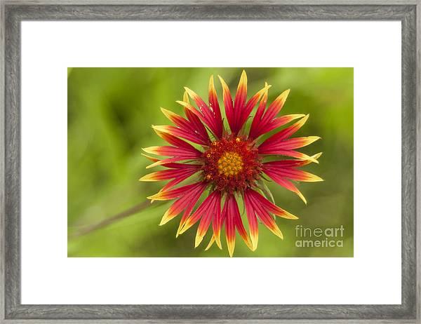 Firewheel Framed Print