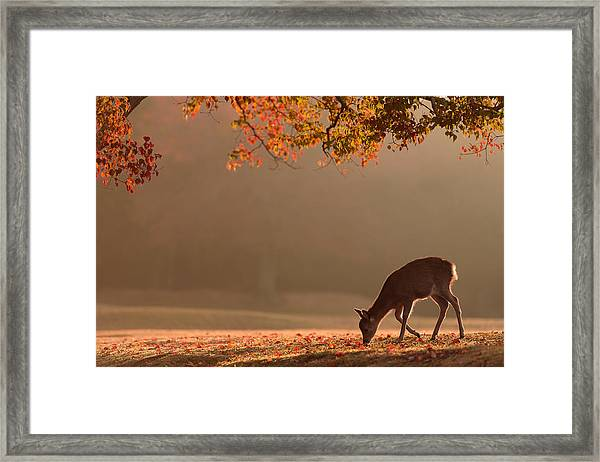 First Autumn Framed Print