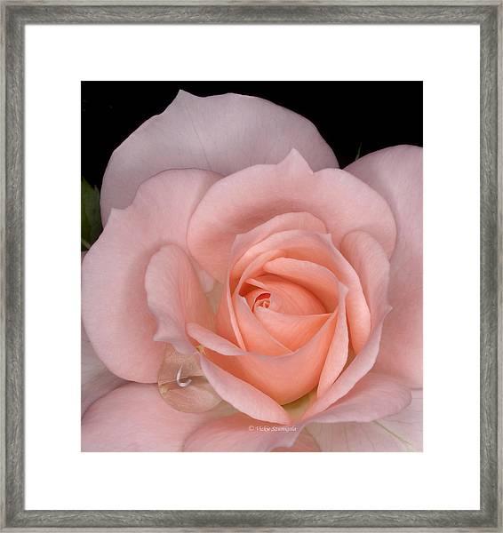 First Bloom Framed Print