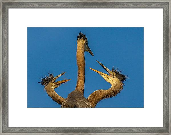 First Come-first Serve Framed Print