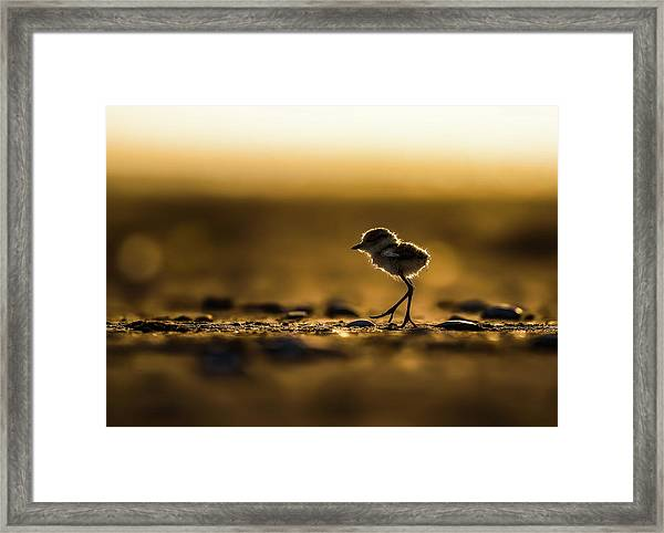 First Day Walking Framed Print