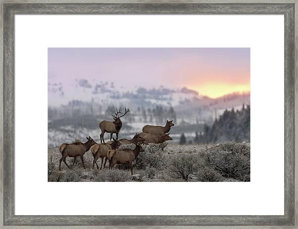 First Light Framed Print by Nick Kalathas