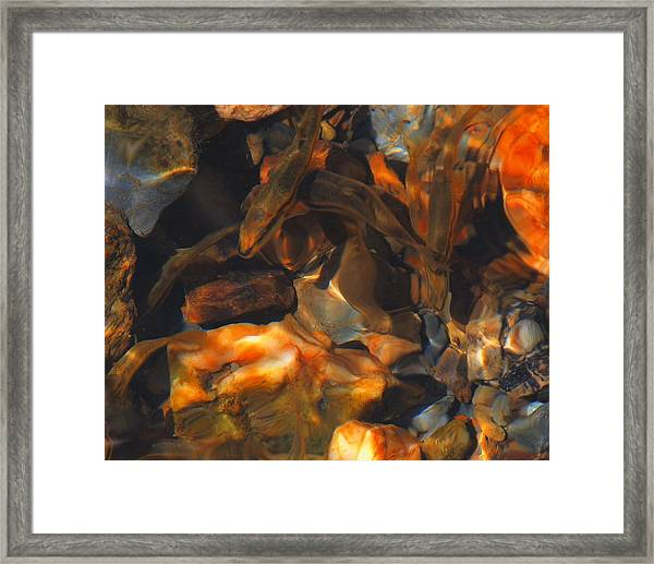 Fish 1 Framed Print