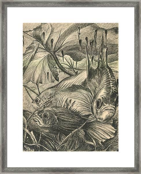 Fish Haven Framed Print