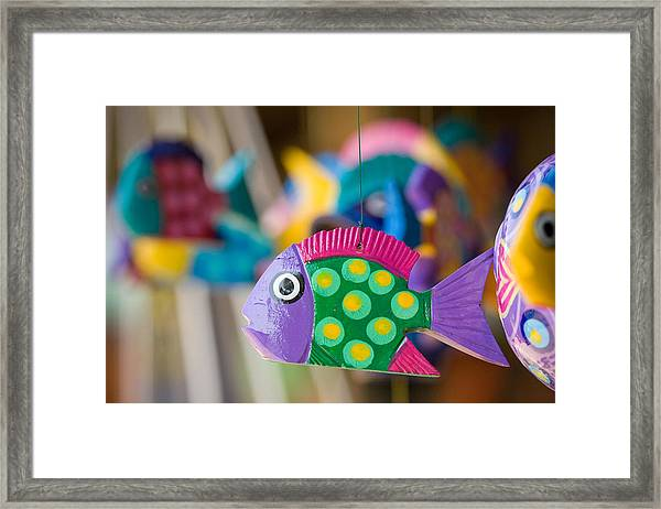 Fish Of Color Framed Print