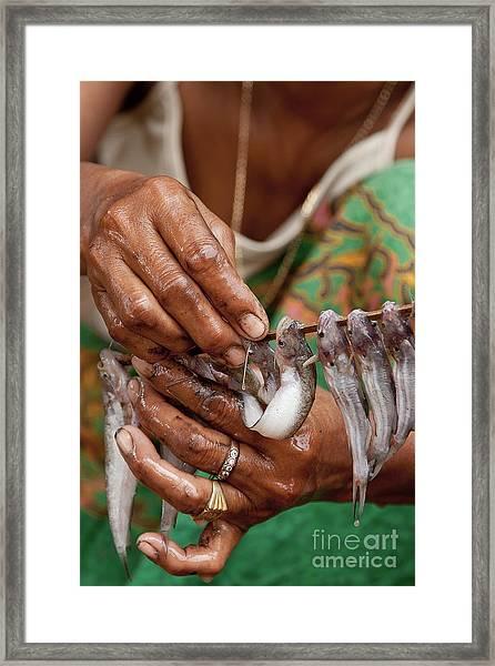 Fish Stick Framed Print