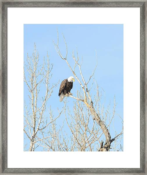 Framed Print featuring the photograph Fishing Eagle by David Armstrong