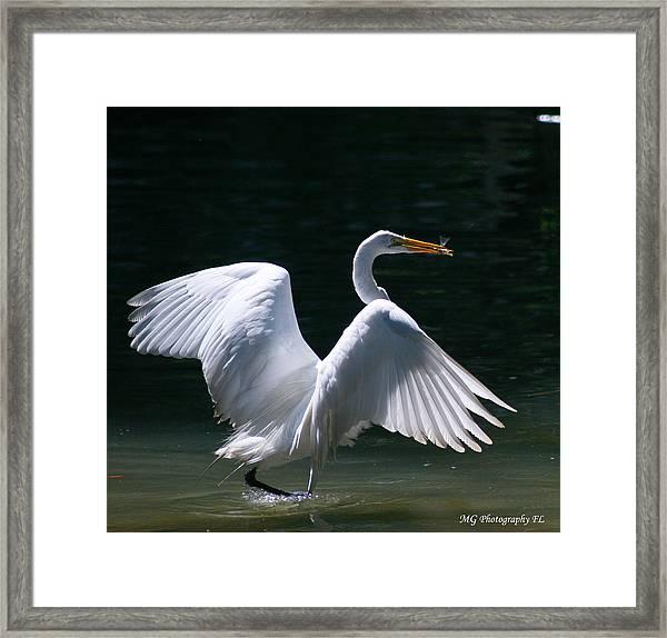 Fishing Egret Framed Print