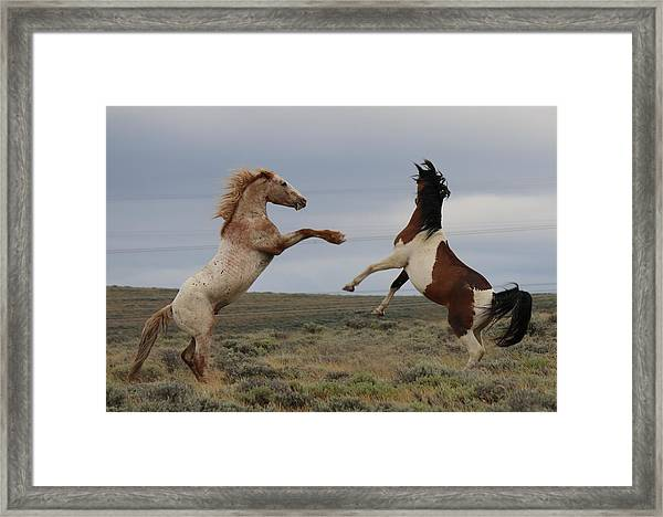Fist Fight  Framed Print