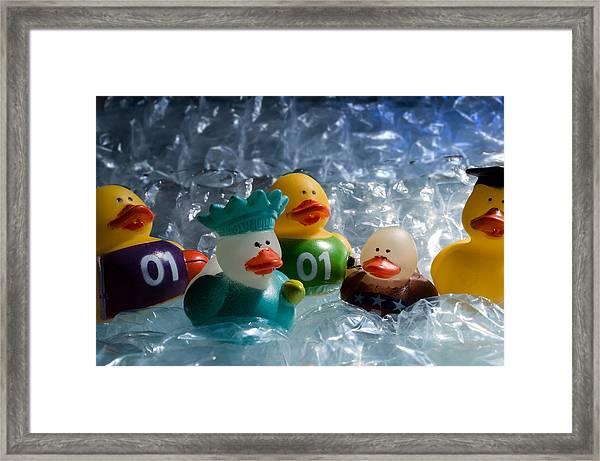 Five Ducks In A Row Framed Print