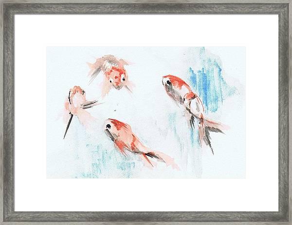 Five Goldfish Framed Print