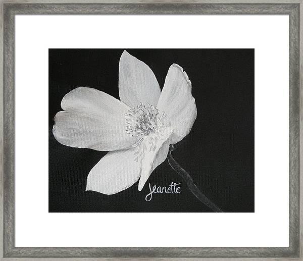 Five Petal Rose Framed Print