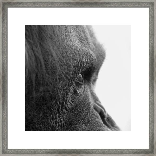 Fixation Framed Print