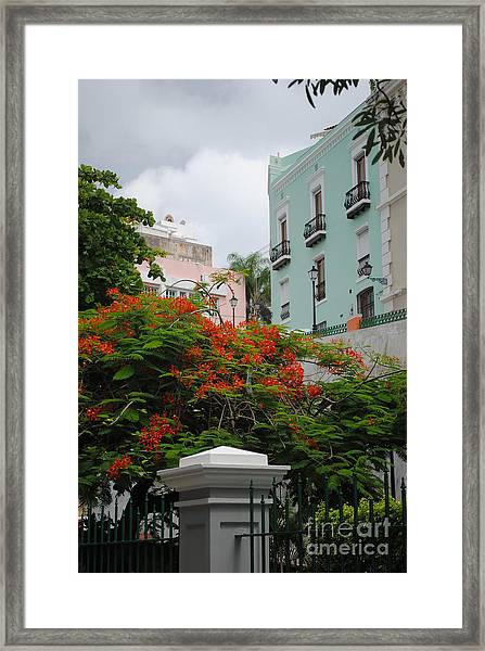 Flamboyan In Park Framed Print