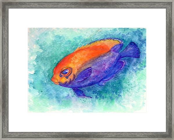Flameback Angelfish Framed Print