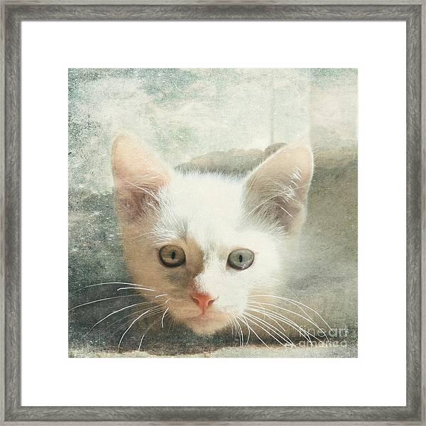 Flamepoint Siamese Kitten Framed Print