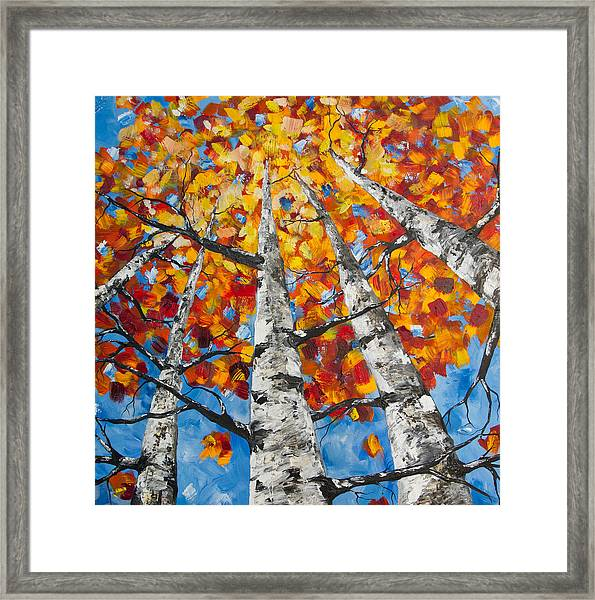Flaming Aspens Framed Print