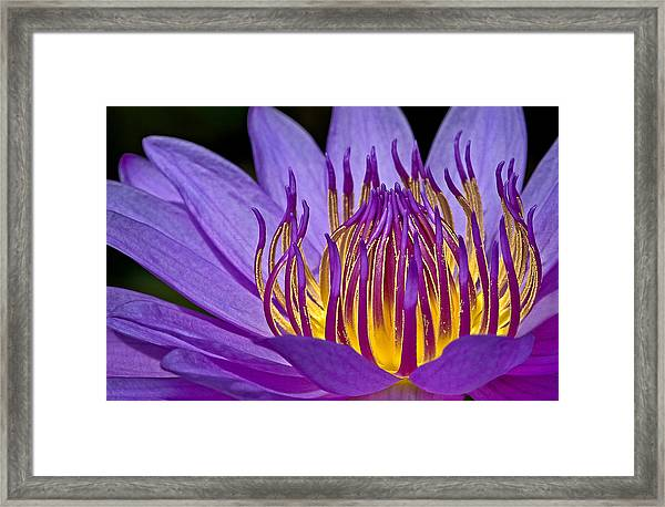 Framed Print featuring the photograph Flaming Heart by Susan Candelario