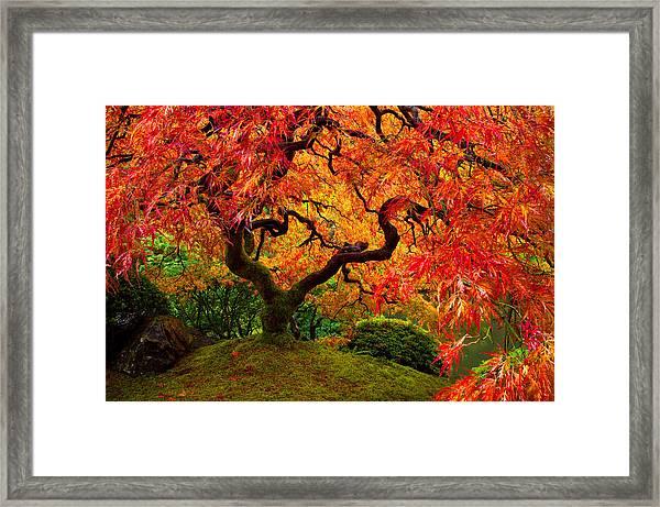 Flaming Maple Framed Print