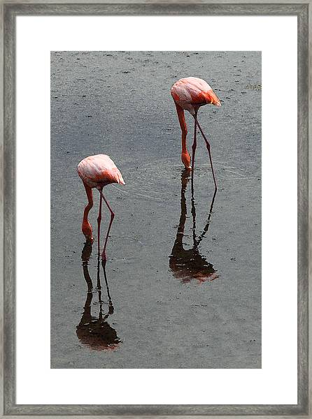 Flamingo Ballet Framed Print