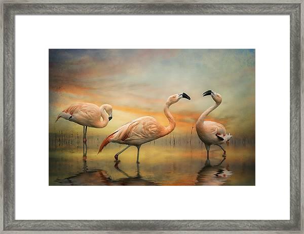 Flamingo Dusk Framed Print