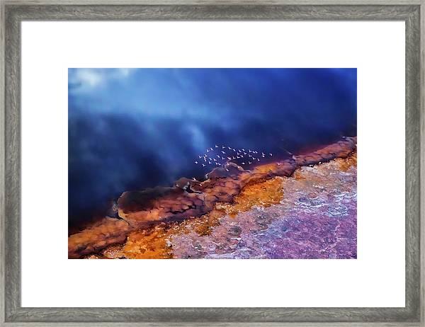 Flamingo Fly Over The Lake Framed Print
