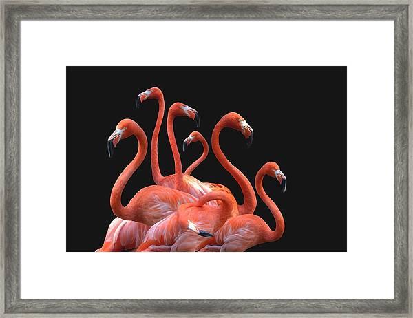 Flamingoes Against Black Background Framed Print by Nodar Chernishev / EyeEm
