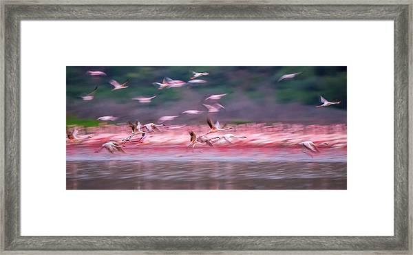 Flamingos In Dawn Framed Print