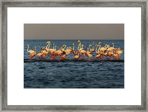 Flamingos On Lake Turkana Outside Elyse Framed Print