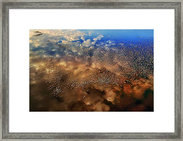Flamingos Over The Clouds Framed Print