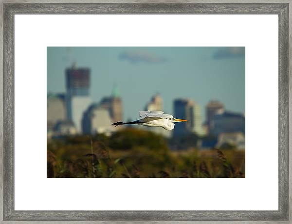 Flight Of The Great Egret Framed Print