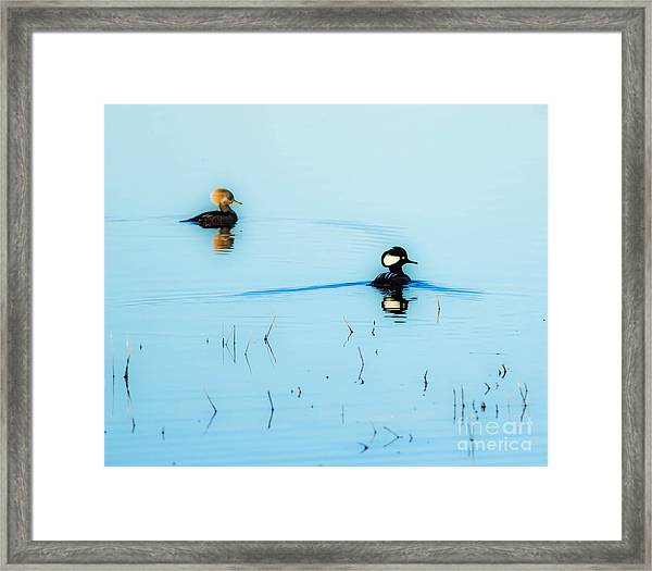 Floating And Glowing Framed Print by Ursula Lawrence